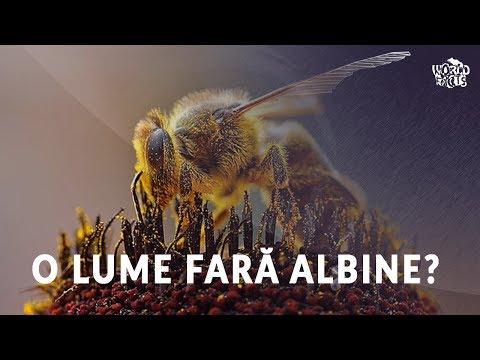 Insecte și paraziți Infestarile cu insecte si acarieni - Revista Galenus