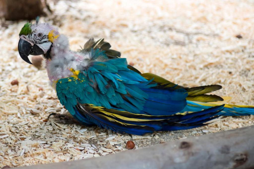 macaw anthelmintic)
