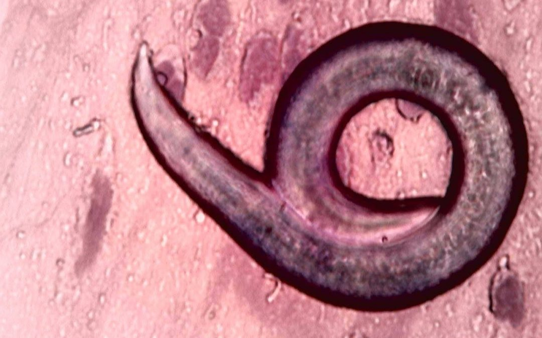 medic parazit)
