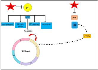 Soigner le papillomavirus chez lhomme - info-tecuci.ro