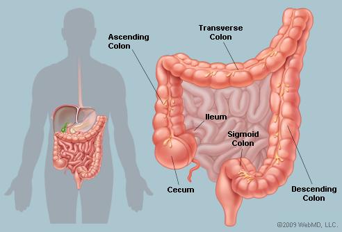paraziți în plămânii umani simptome și tratament