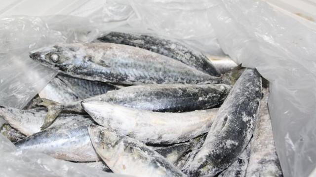 Peștele infestat nu prezintă pericol dacă este prelucrat corespunzător, discuții ANSA | IPN