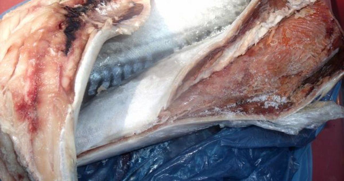 Ce viermi sunt în macrou Detoxifiere rapida pentru slabit