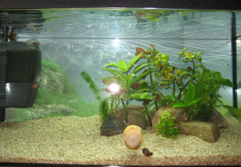 viermi mici albi in acvariu)