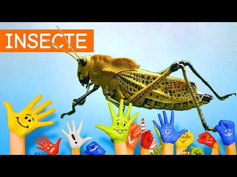 Viermi, cum să te infectezi, Platyhelminthes de organ de selecție