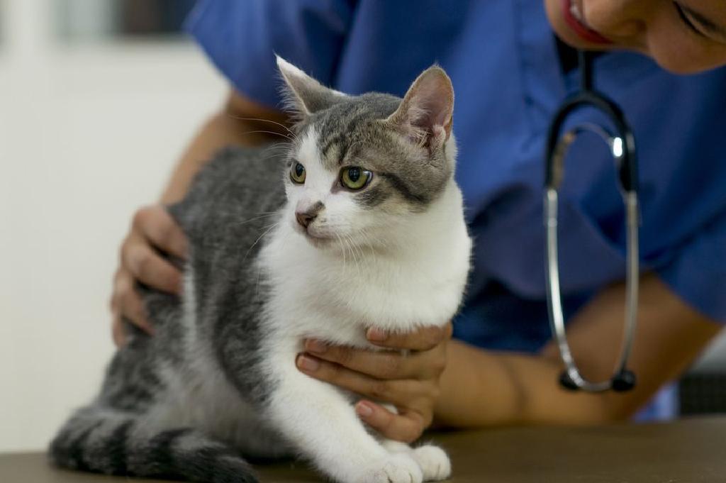 giardia pisici tratament