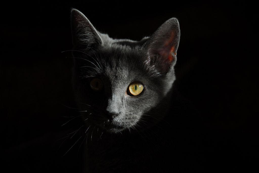 giardia pisica)