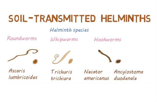 parasitic helminth facts