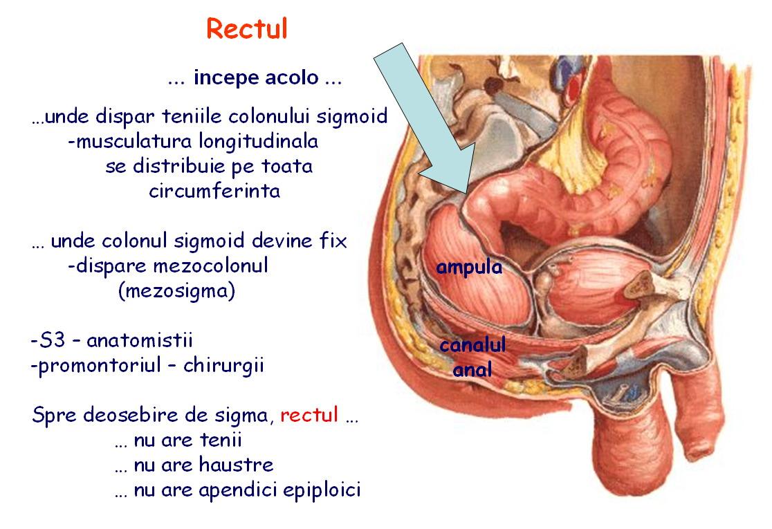 Anatomia si fiziologia colonului