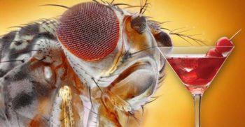 Cum prevenim și cum tratăm mușcăturile de insecte? Recomandări BTM