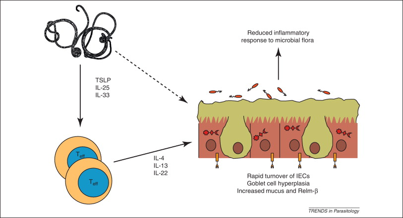 helminth therapy for ms
