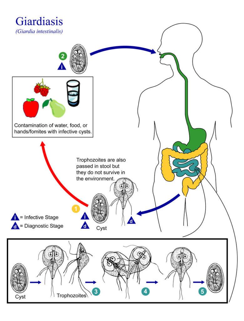 Oameni și paraziți din corpul uman - info-tecuci.ro