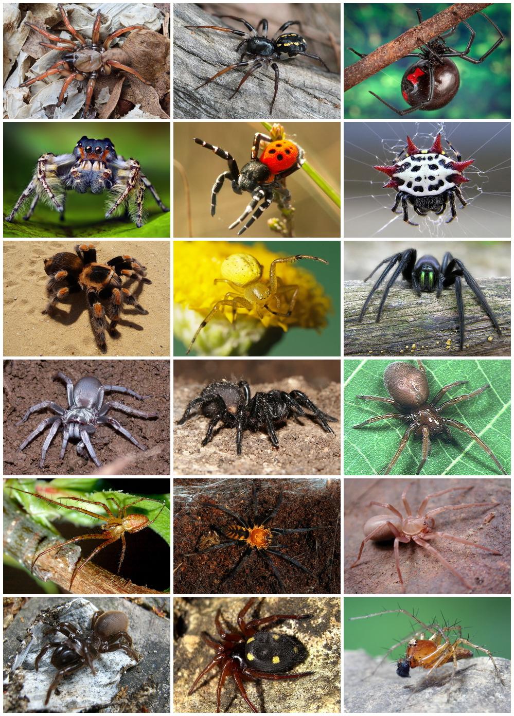 păianjeni prădători și paraziți