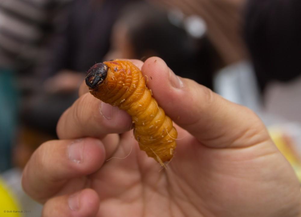 larve de tenă