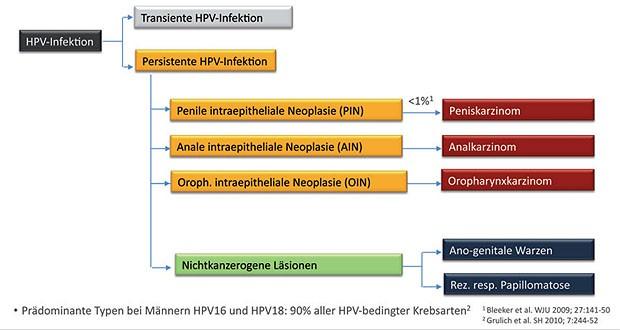 papillomavirus impfung manner