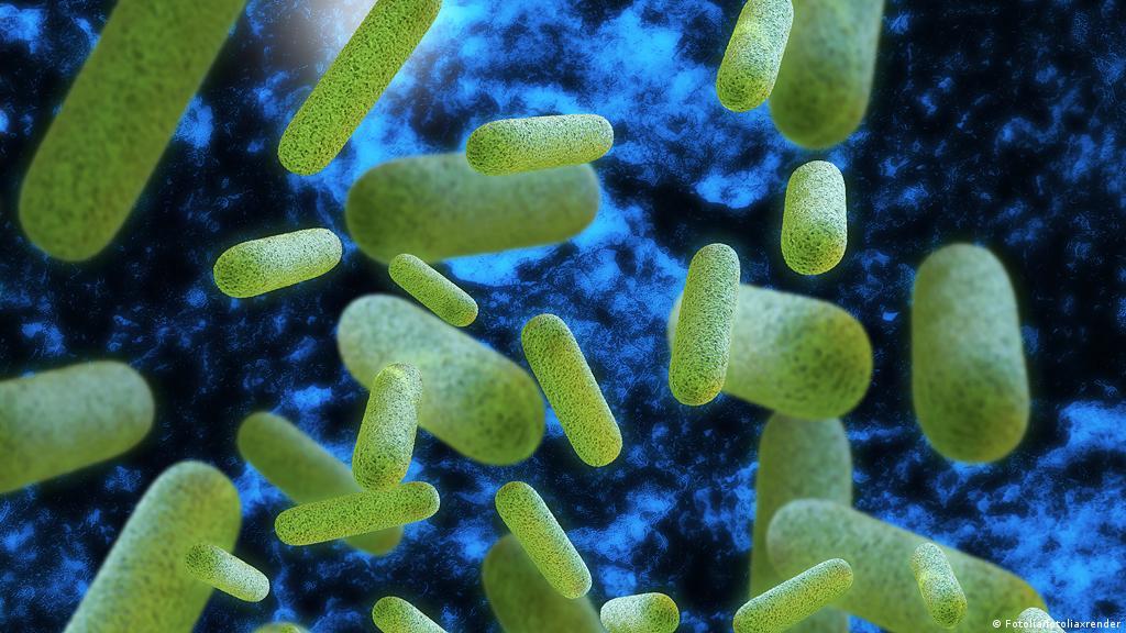 virusi koji napadaju bakterije)
