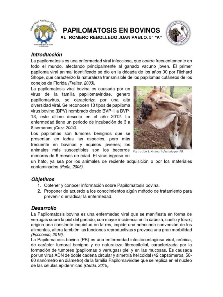 Tratamiento de papilomatosis bovina