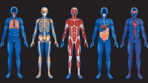 Mă pierd în corpul uman. Dupa 25 de ani, incepe regresul corpului uman
