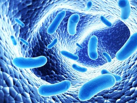 bacterii anaerobe definitie