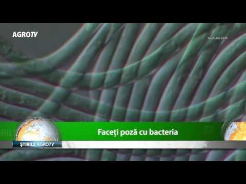 Parasite - Parazit () - Film - info-tecuci.ro