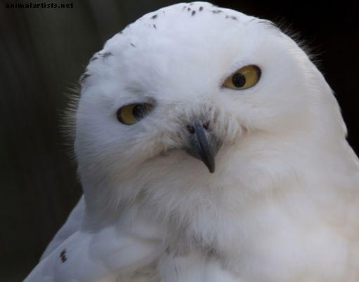 hemoparaziți de păsări
