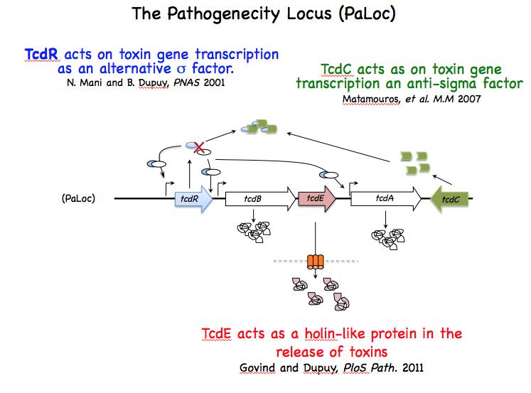 Clostridium difficile toxine A/B - Tritest