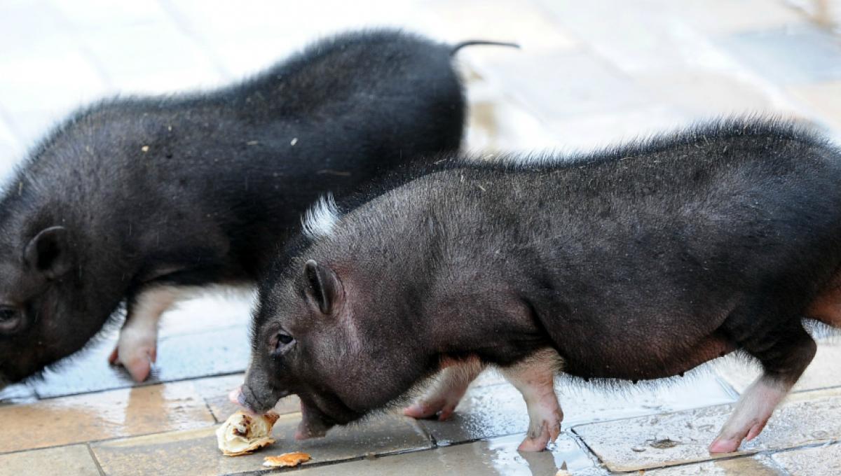Prognoză: Carnea de pasăre va deveni cea mai consumată proteină din lume