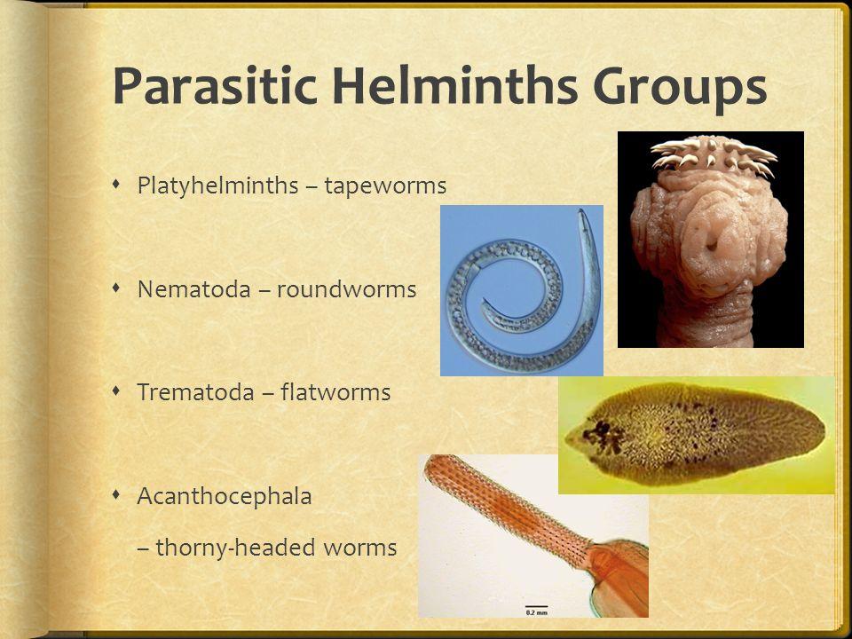 parasitic helminth facts)