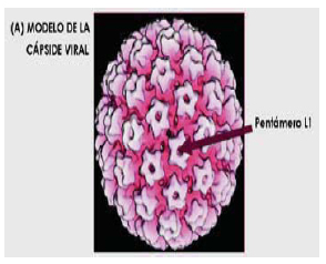 Virus papiloma alto riesgo, Virus del papiloma humano bajo riesgo Câncer de Mama