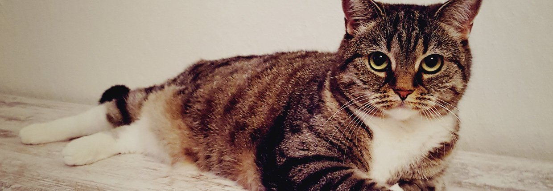 woher kommen giardien bei katzen