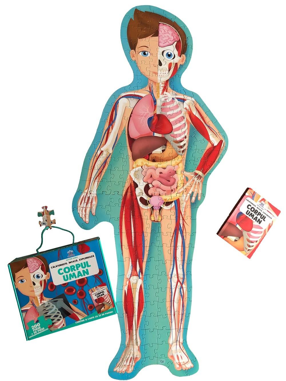 Oamenii de stiinta au descoperit un nou organ in corpul uman   Medlife