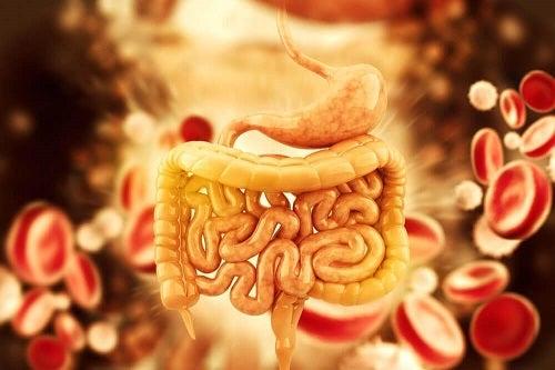detoxifiere de colon cu ulei de ricin hpv genital warts male symptoms