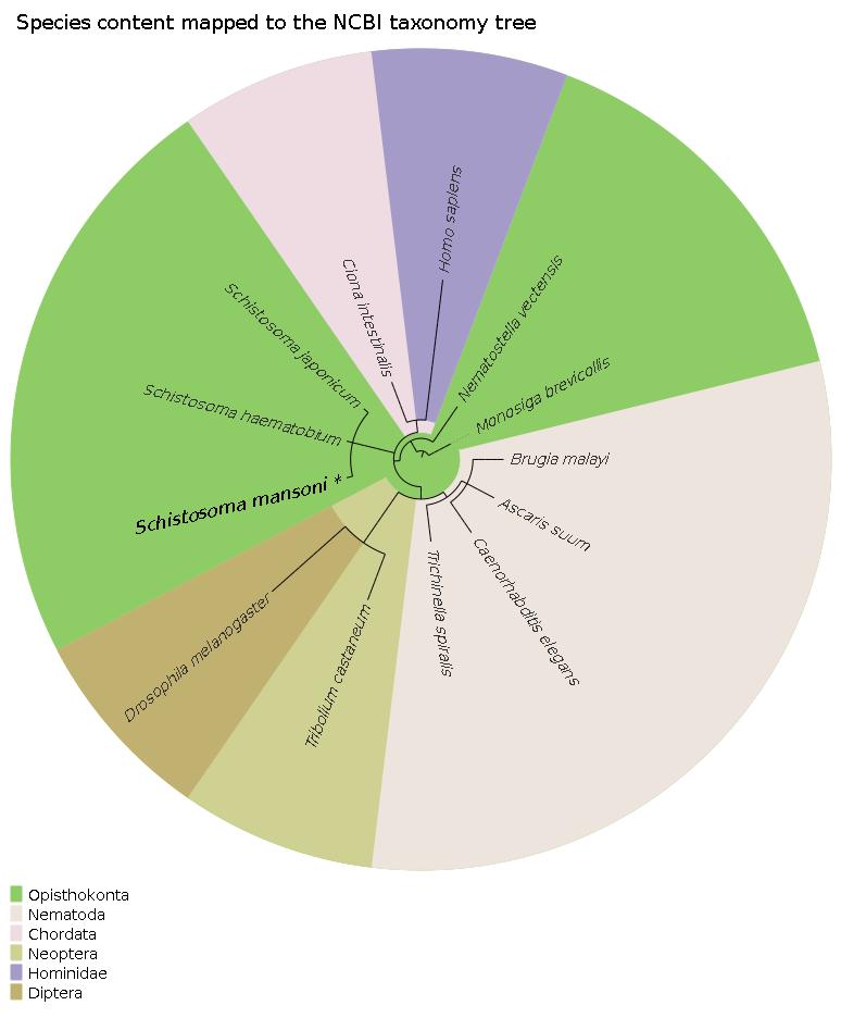 Human papillomavirus types, Case Report