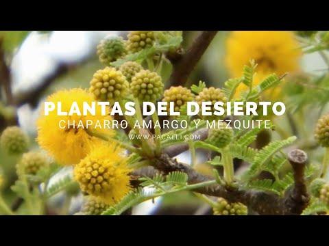 Cele mai frecvente 50 de plante medicinale și utilizările lor