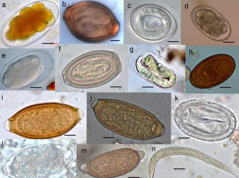 tratamentul de casă al grâului de ață medicamente sigure pentru tratarea viermilor