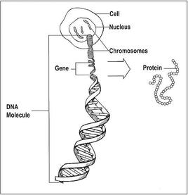 cancer genetic mutations in humans)
