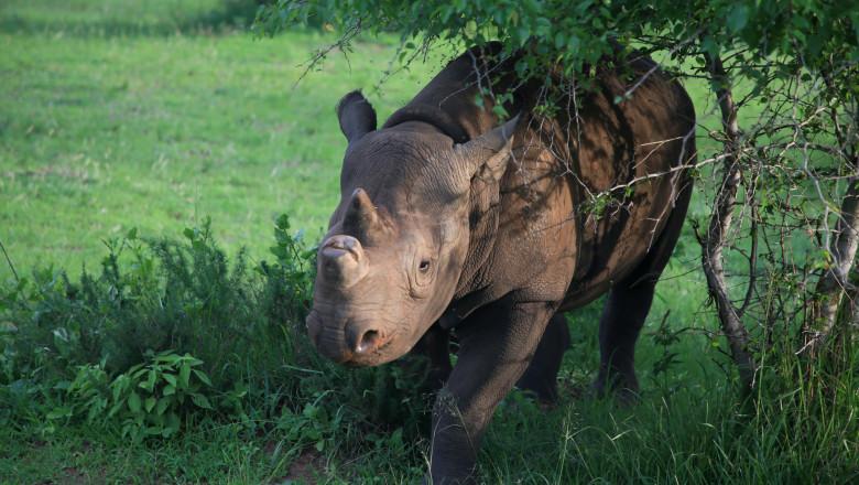 rinocer la oameni trasmissione papilloma virus bagno