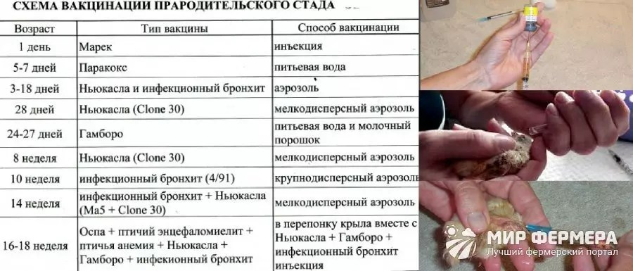prevenirea helmintelor la om)