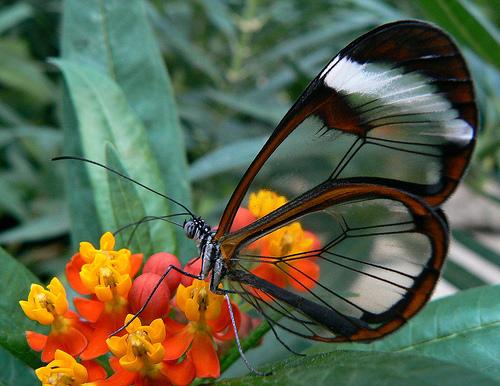 imagini cu paraziți cu fluturi