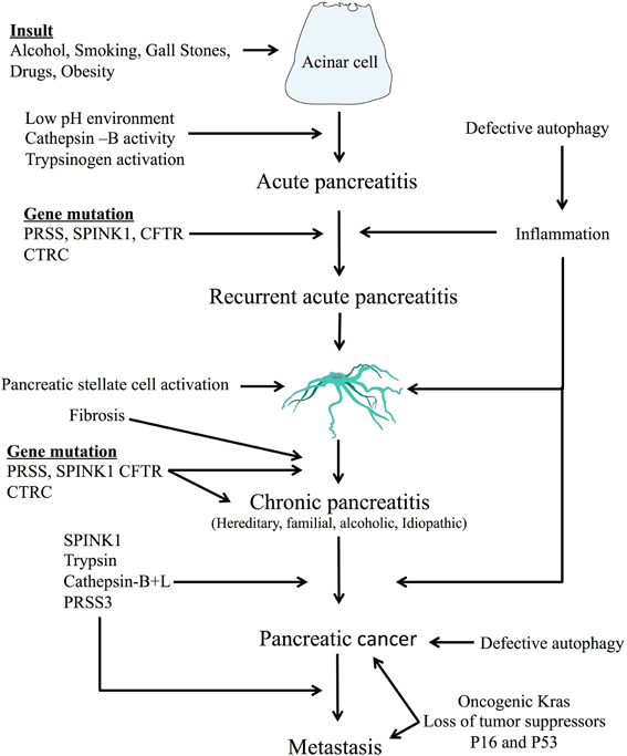 pancreatic cancer from pancreatitis)