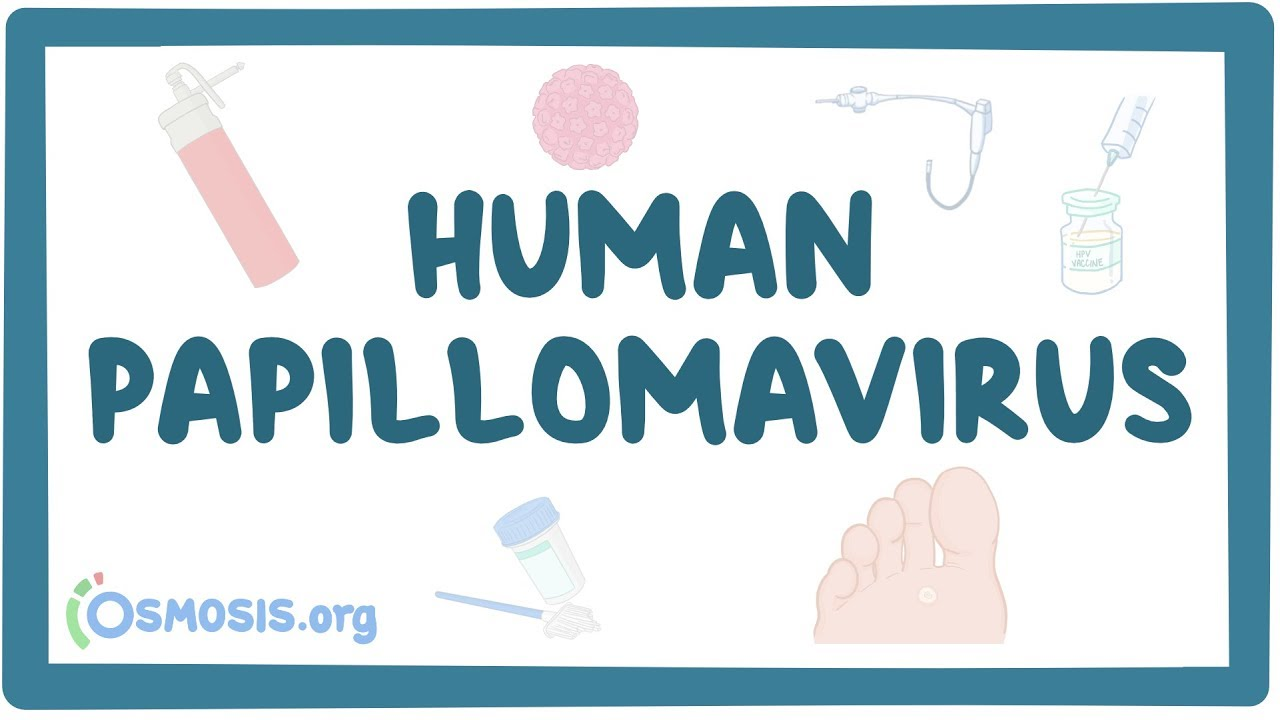 pathogenesis of human papillomavirus hpv type 16 warts