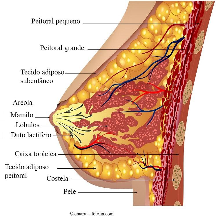 Hellebore tratamentul parazit caucazian Pediculoza, ce este? Tratamentul și prevenirea - Uleiul