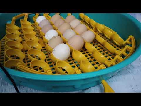 preparate pentru ouă de viermi)