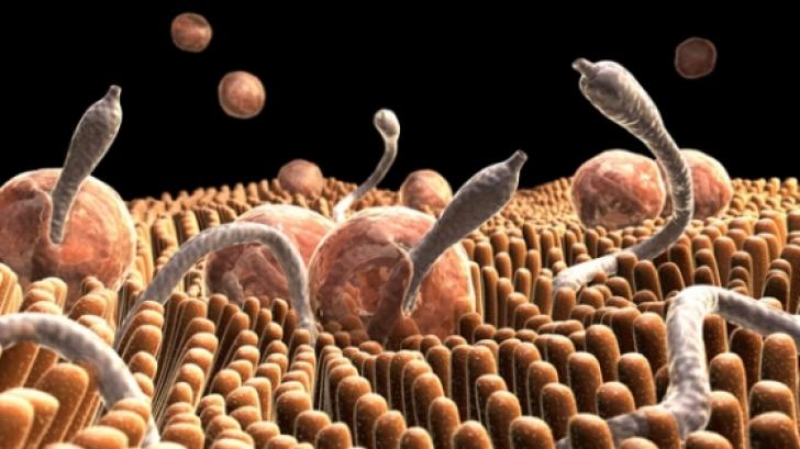 fecale la viermi și protozoare