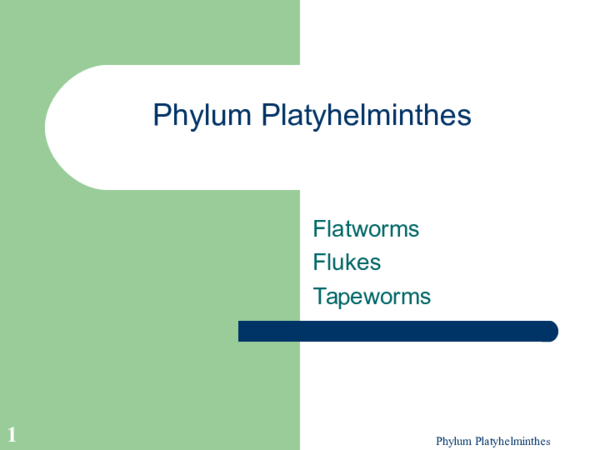 platyhelminthes filetyp ppt)