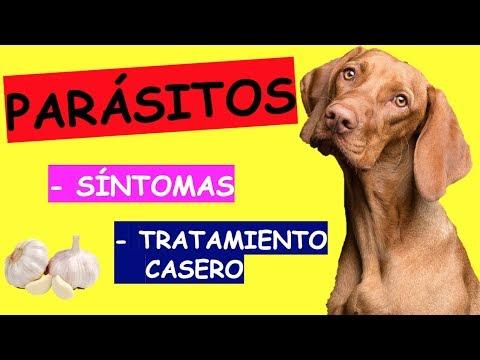 giardia vacuna pentru perros poate provoca viermi rotunzi