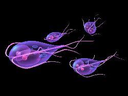 infecție cu protozoare de giardiază