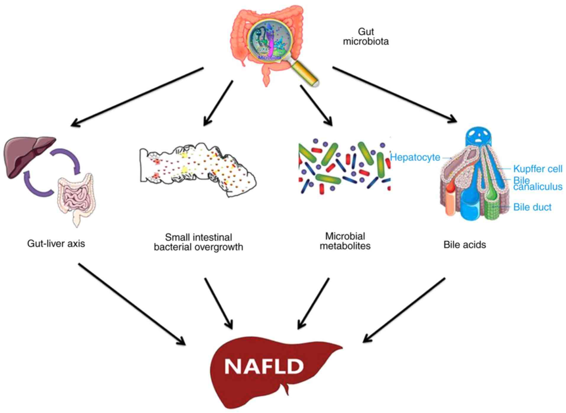 Dysbiosis ncbi, Antihelminticos naturales