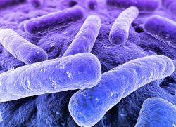 Bacteriile utile în industria alimentară