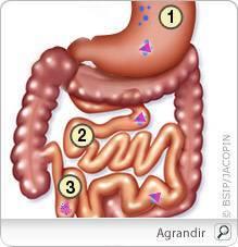 anemie vitamine b9)